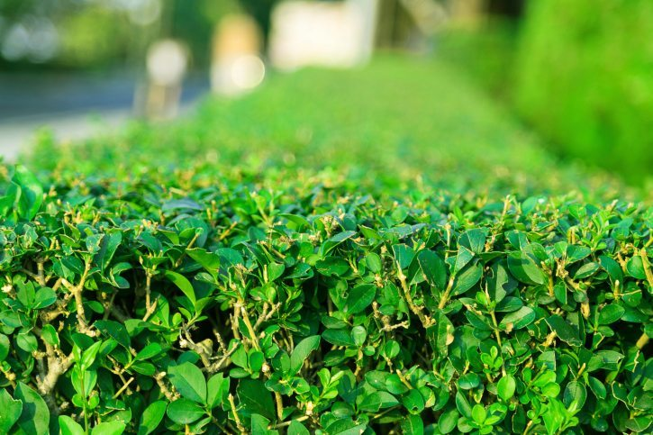 Beginner's Guide to Planning Hedges