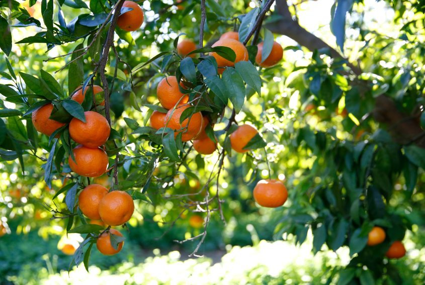 Best Fruit Trees to Plant